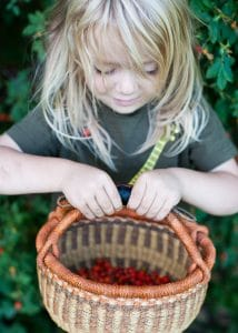 Boy with a basket of wild rose-hips.
