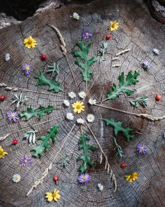 Nature mandala on a stump in the forest.