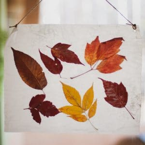 Fall leaves pressed in wax paper.