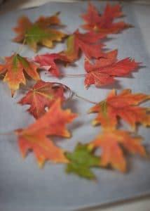 Fresh fall leaves.