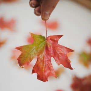 Wax-dipped leaf.