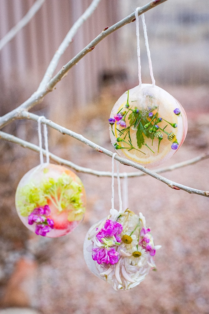 Ice ornaments hanging in a tree
