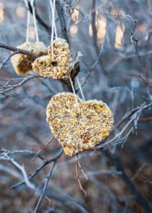 """A birdseed """"cookie"""" hanging from a tree branch."""