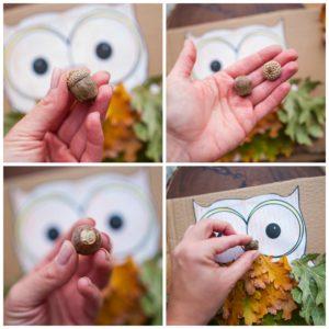Create a beak for the owl using an acorn.
