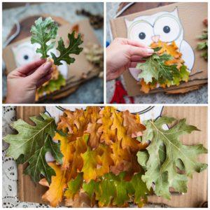 Create owl wings with oak leaves.