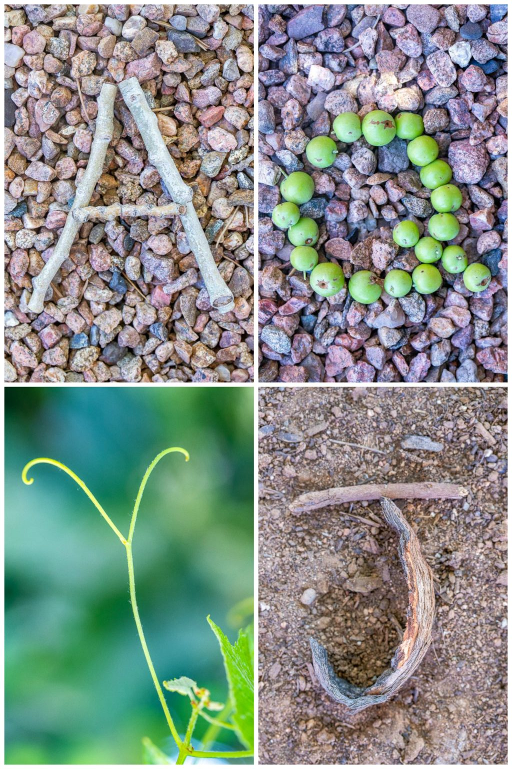 A few different nature alphabet letters