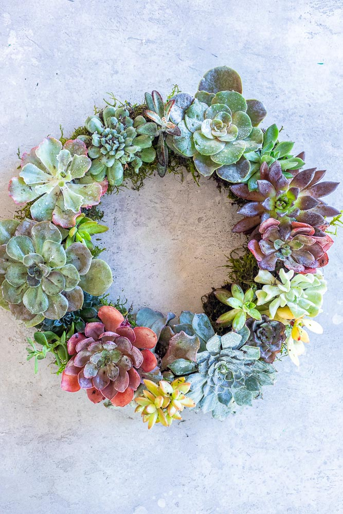 Close up of a living succulent wreath