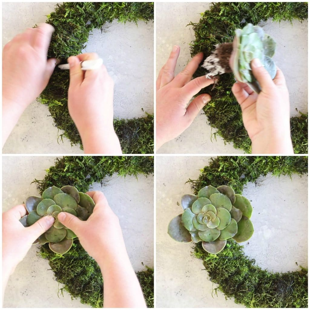 showing step by step instructions for making a succulent wreath